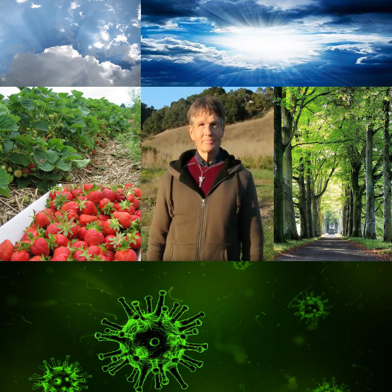 Ozone Background & History